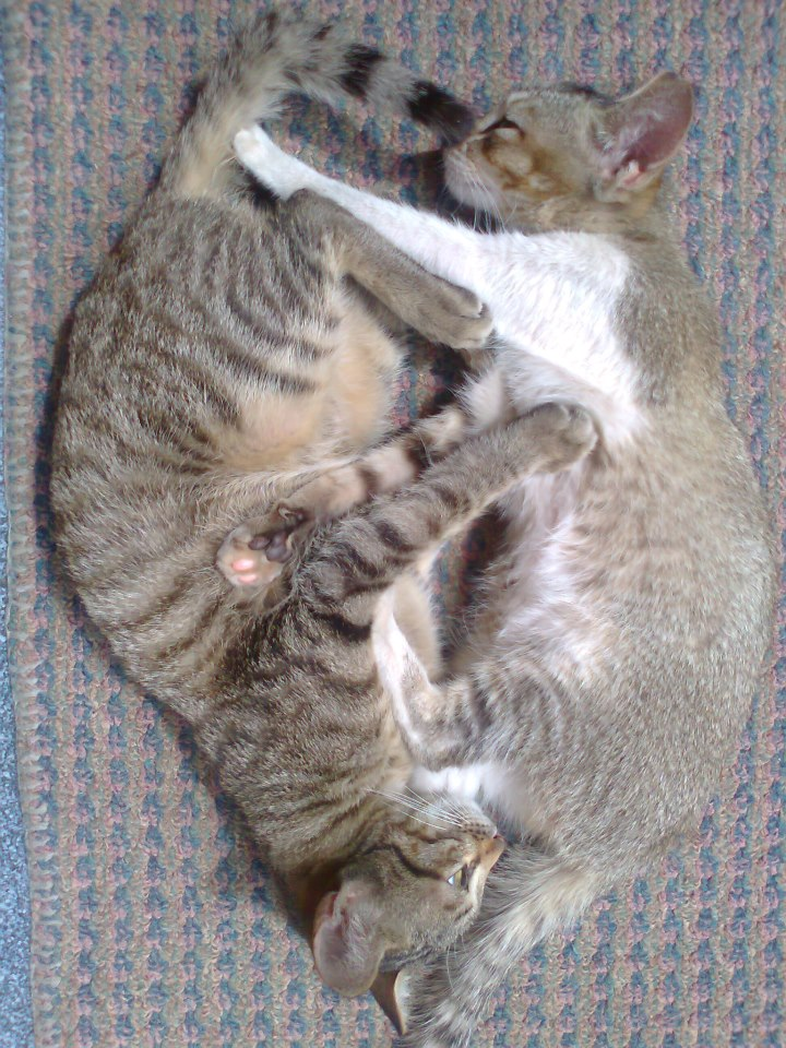 Rizki Harpan Riady yin yang #QPhotoCompetition 7DES